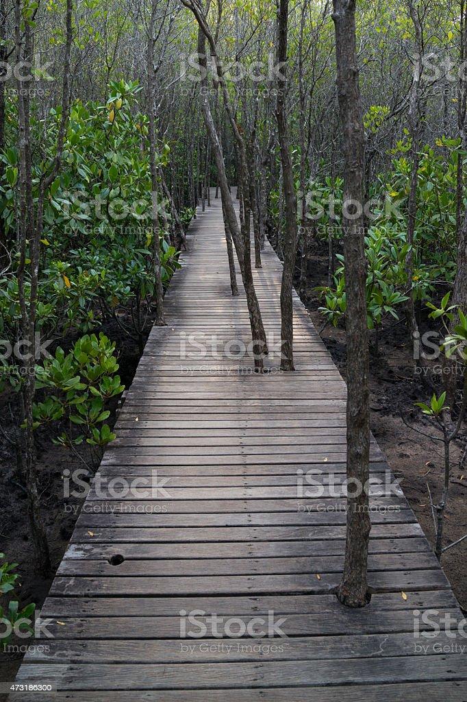 Arbres se développer le chemin en bois dans la forêt de mangrove photo libre de droits