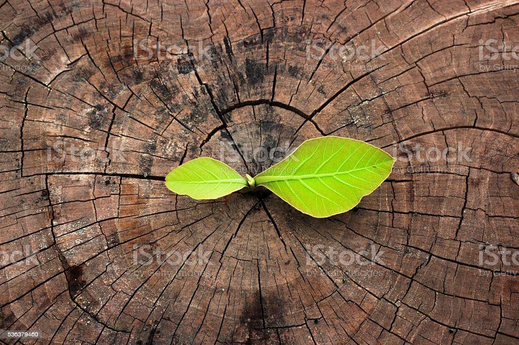 Trees growing on cracks wood. stock photo
