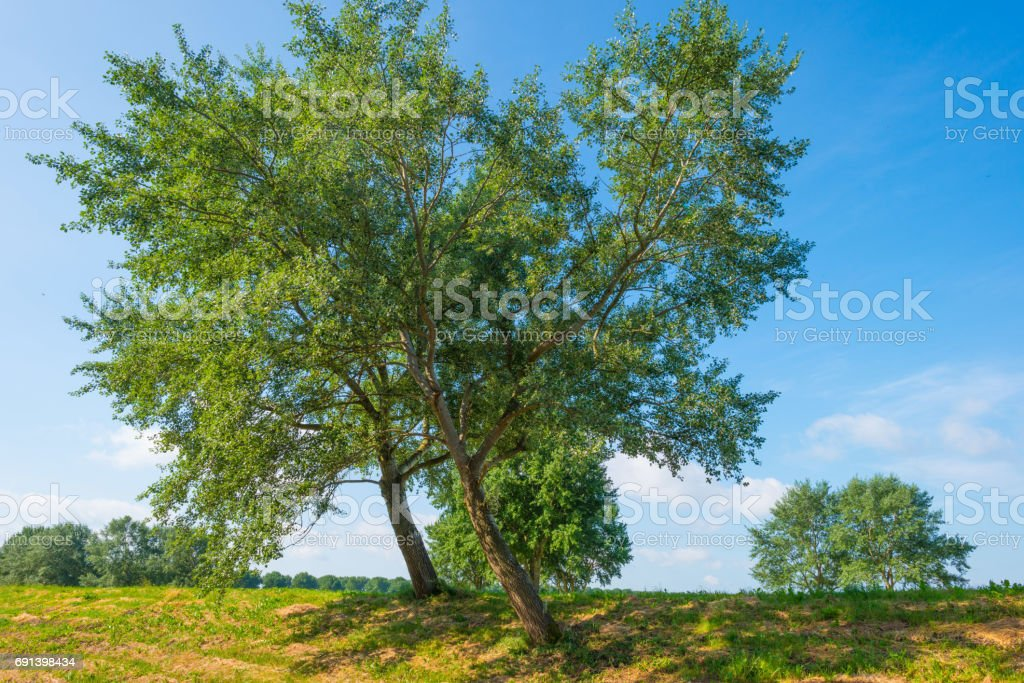 Trees in a field in sunlight in spring stock photo