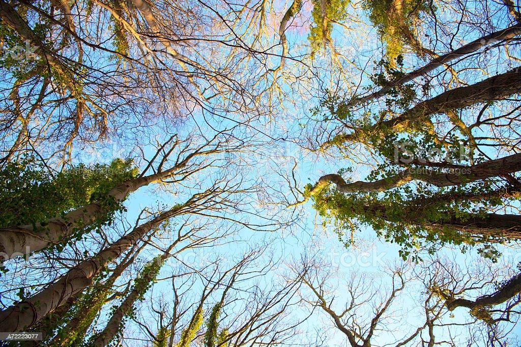 Alberi di una foresta foto stock royalty-free