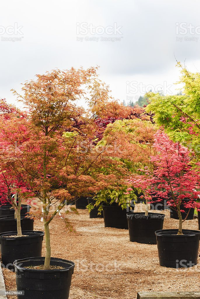 Trees in a Nursery stock photo