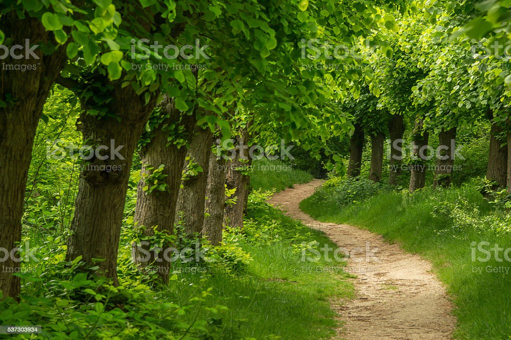 Trees in a row along a path stock photo