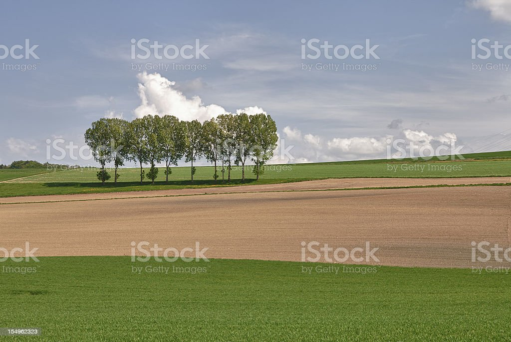 Trees in a Row, Spring, Vaud, Switzerland royalty-free stock photo