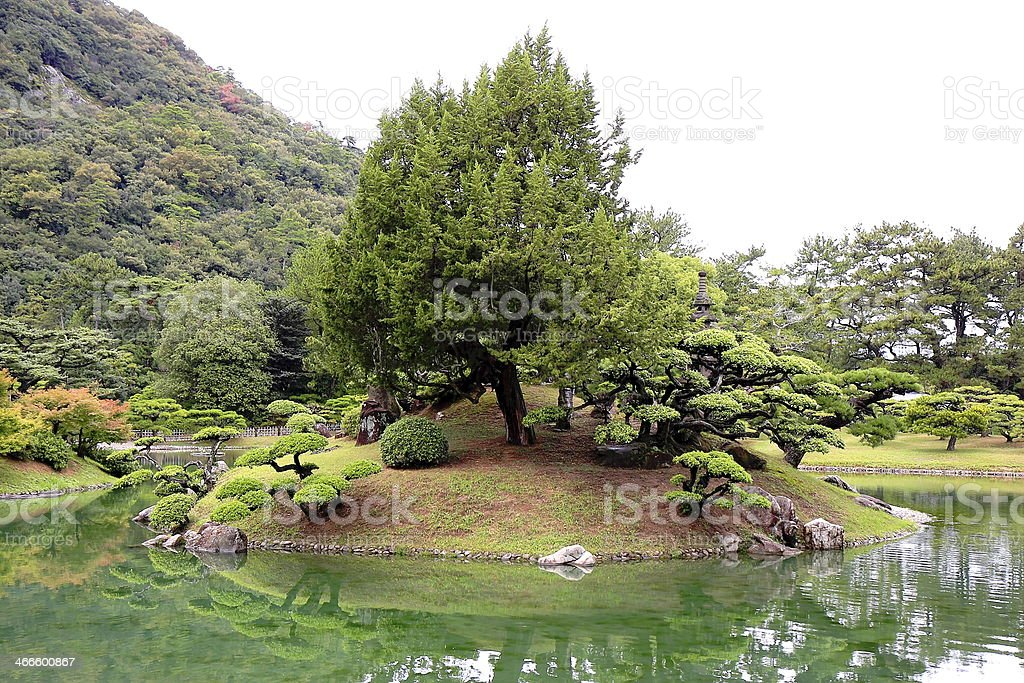 Trees in a small lake stock photo