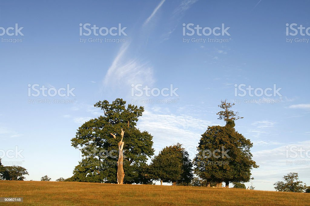 Trees in a UK meadow stock photo