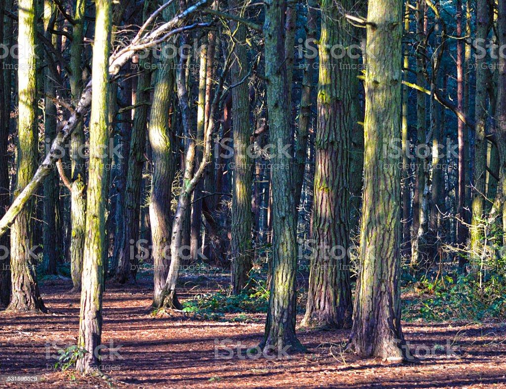 Arbres en bois photo libre de droits