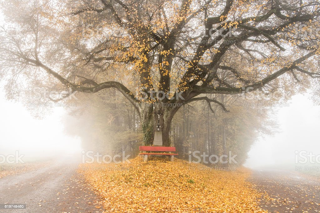 Trees in autumn fog stock photo
