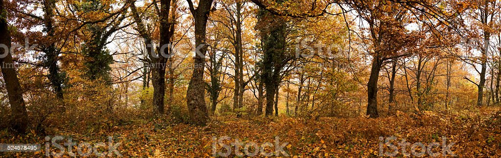 Trees in autumn forest stock photo