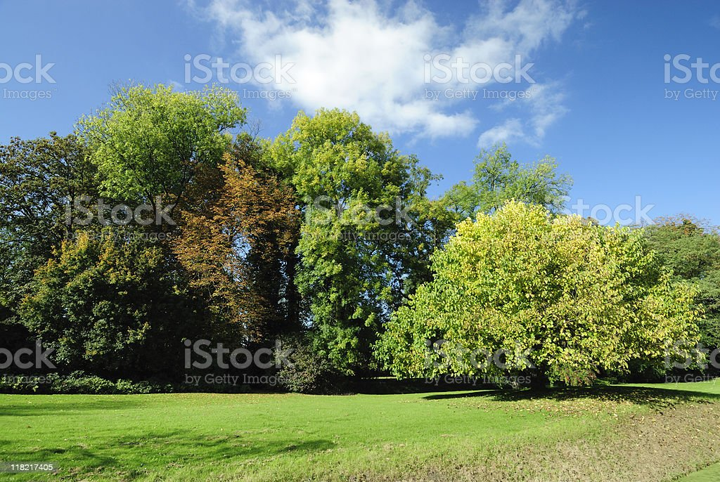 Trees in autumn stock photo