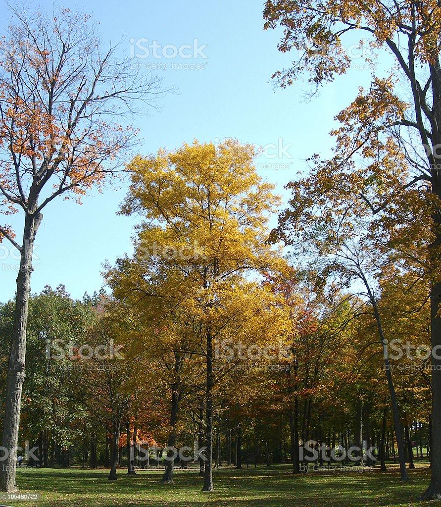 Trees in autumn royalty-free stock photo