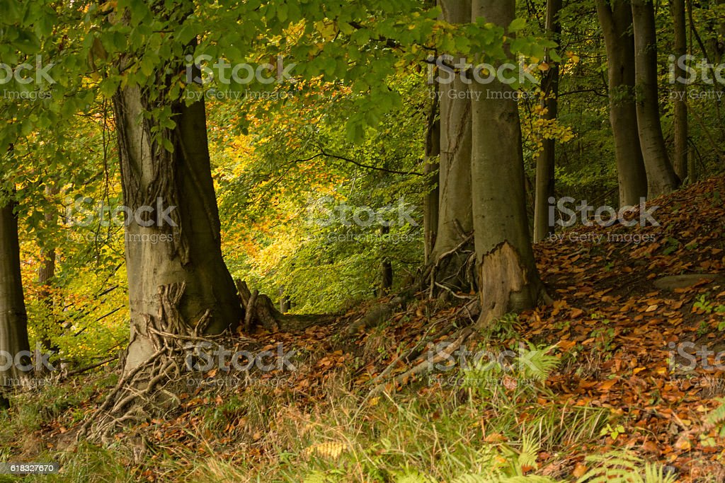 Trees in Autumn royalty-free stock photo
