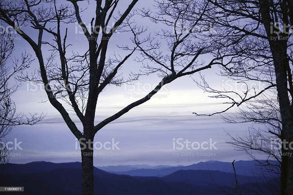Trees in blue royalty-free stock photo