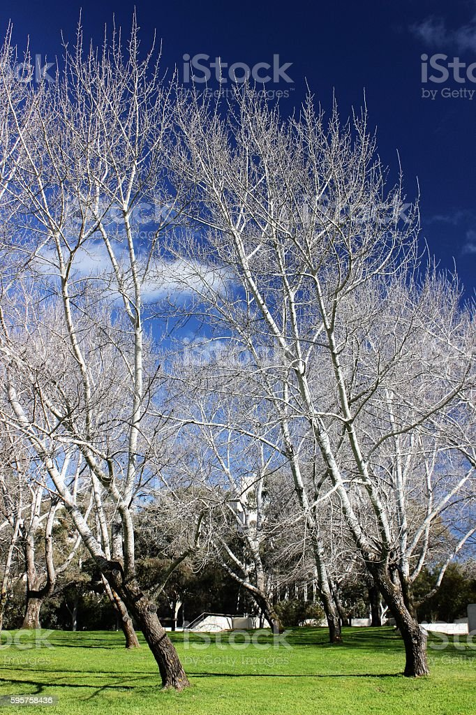 Trees in Canbera stock photo