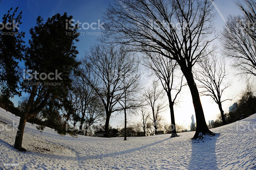 Trees in Central Park, New York City stock photo