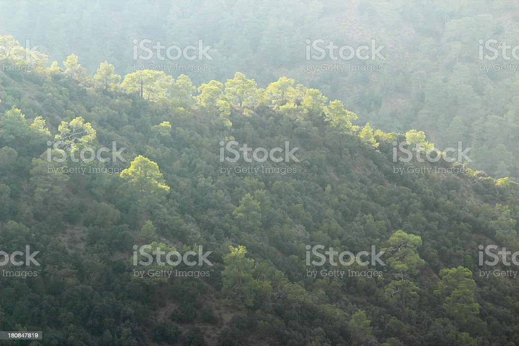 trees in early morning foggy sunlight Troodos cypriate mountains  Cyprus stock photo