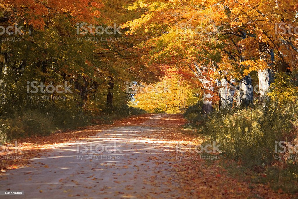 Trees in fall color along a dirt backroad stock photo