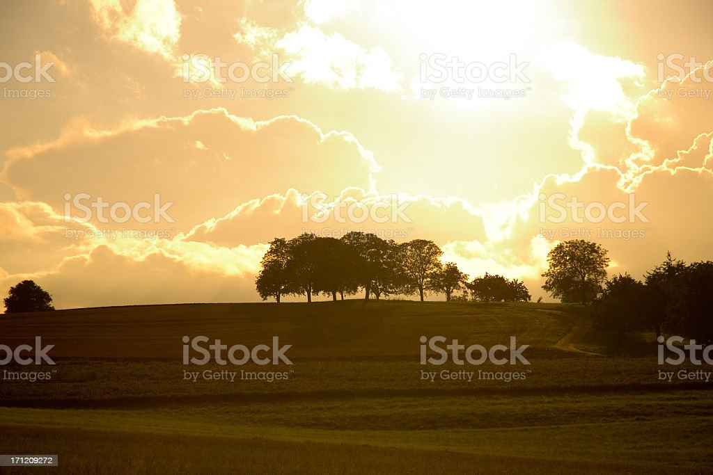 Trees in Field royalty-free stock photo