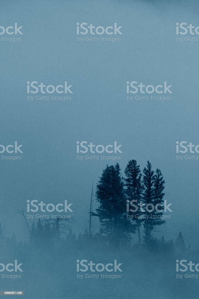 Trees in Fog Along Yellowstone River stock photo