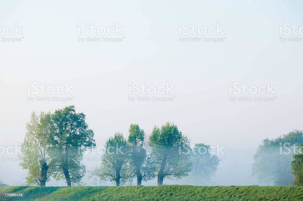 Trees in fog royalty-free stock photo