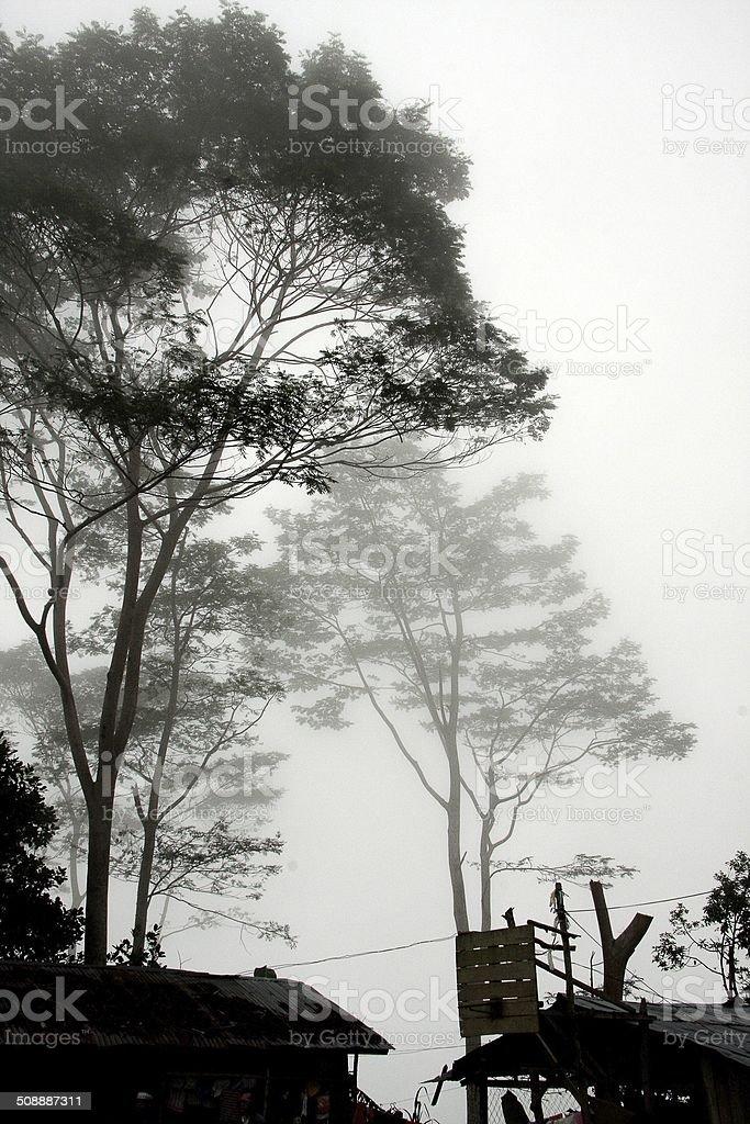 Trees in fog stock photo