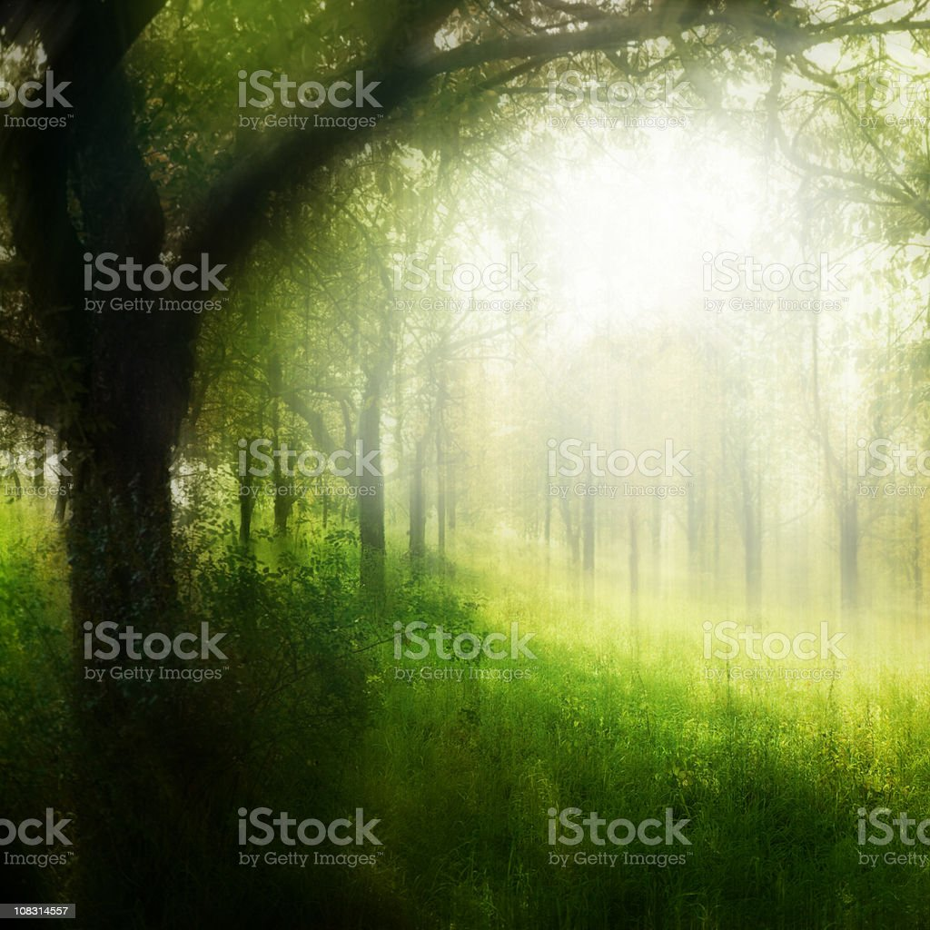 Trees In Forest – Motion Blurred royalty-free stock photo