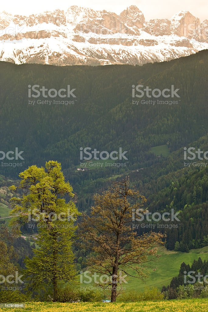 trees in front of mountain backdrop royalty-free stock photo