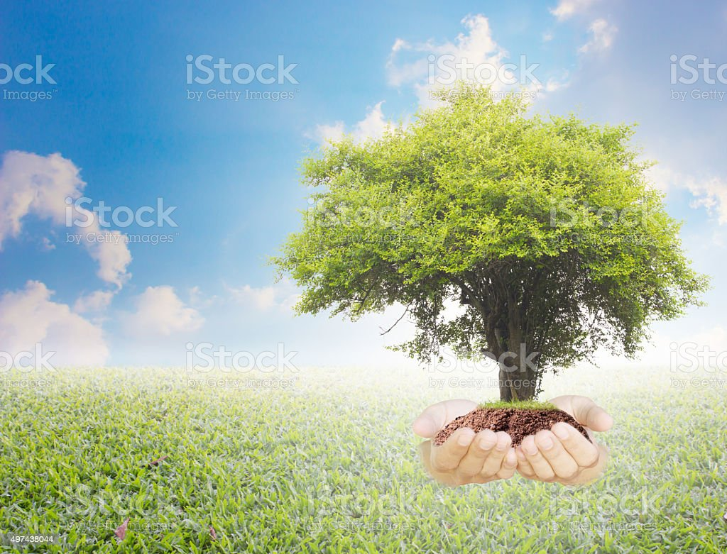 Trees in hands with nature abstract background. stock photo