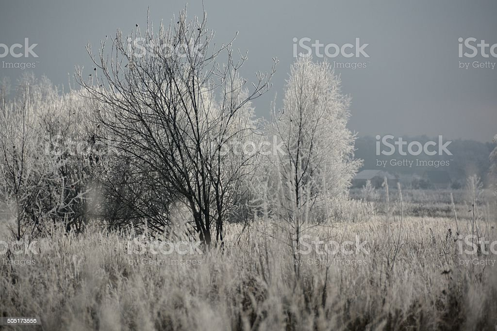 Trees in hoarfrost royalty-free stock photo