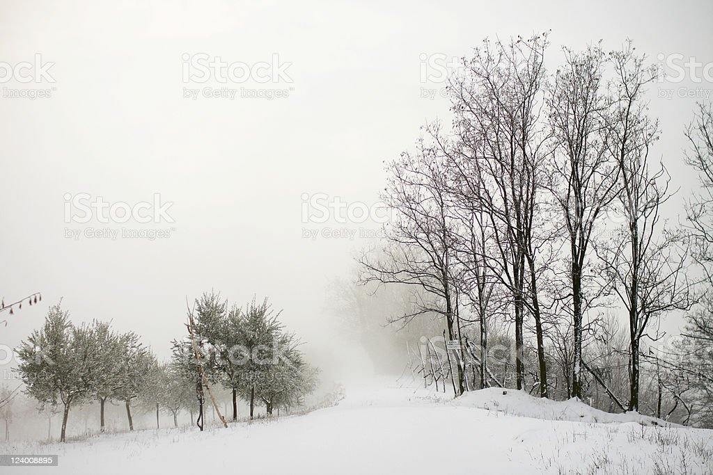 Trees in misty winter under the snow royalty-free stock photo