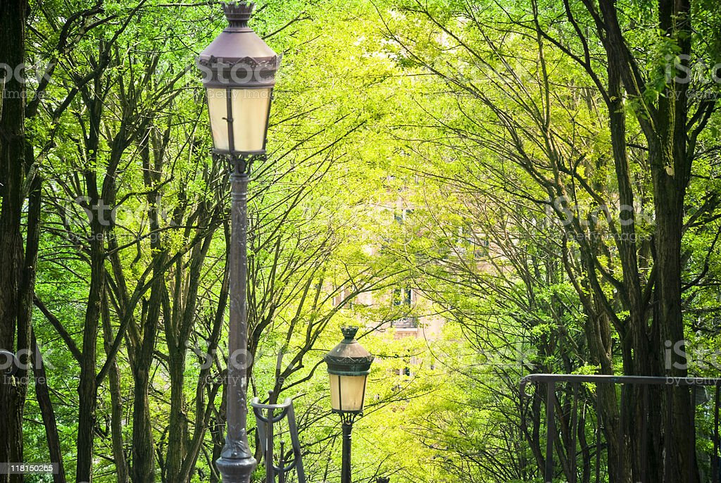 Trees in Montmartre royalty-free stock photo