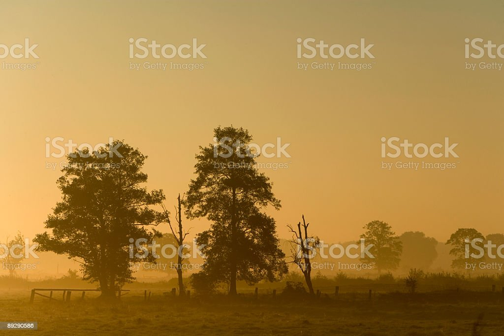 Trees in morning fog countryside (XXL) royalty-free stock photo