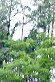 trees in motion. Artistic blur effect