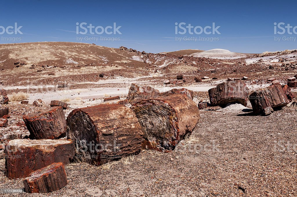 Trees in Petrified Forest National Park stock photo