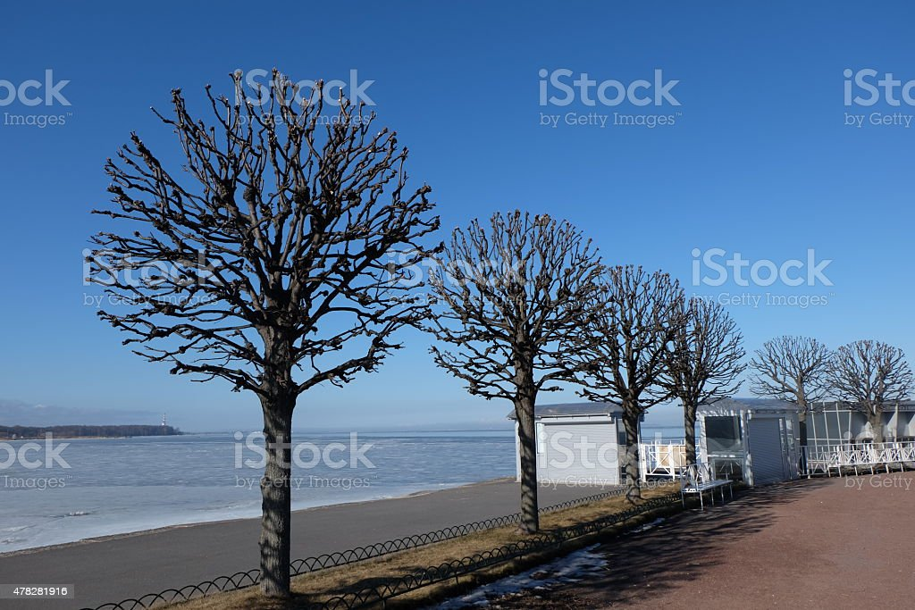Trees in russia stock photo