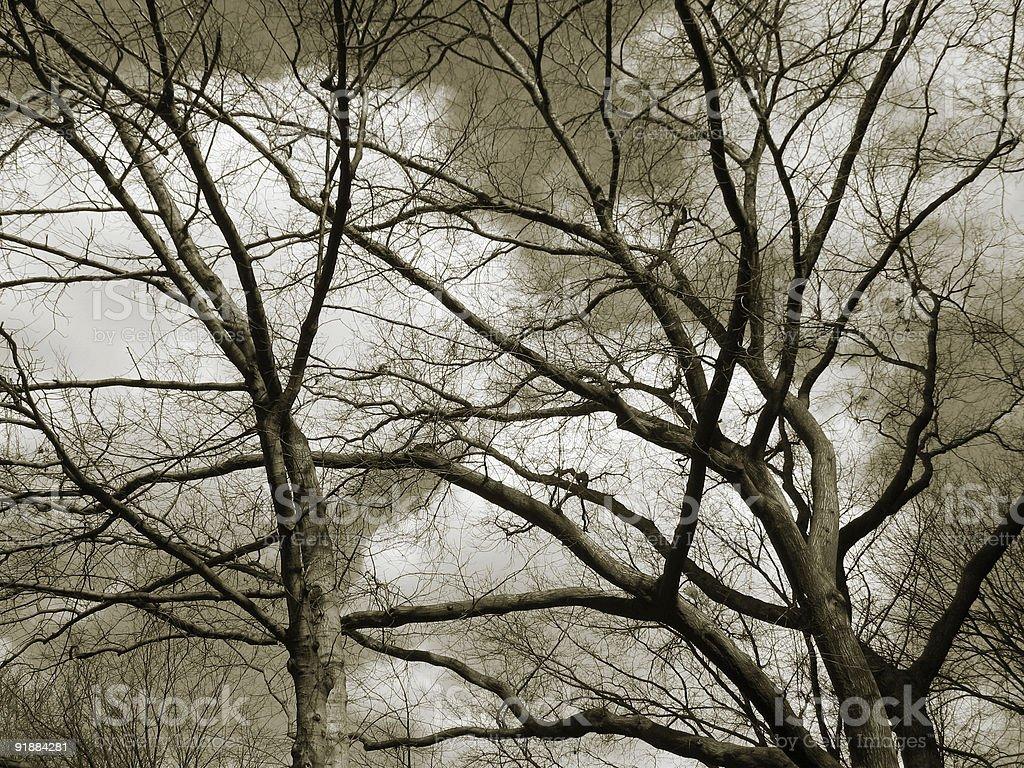 trees in sky royalty-free stock photo
