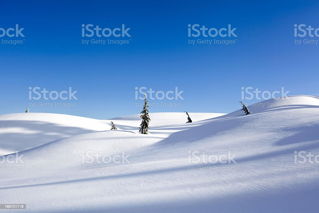 Trees in Snow with Blue Sky stock photo