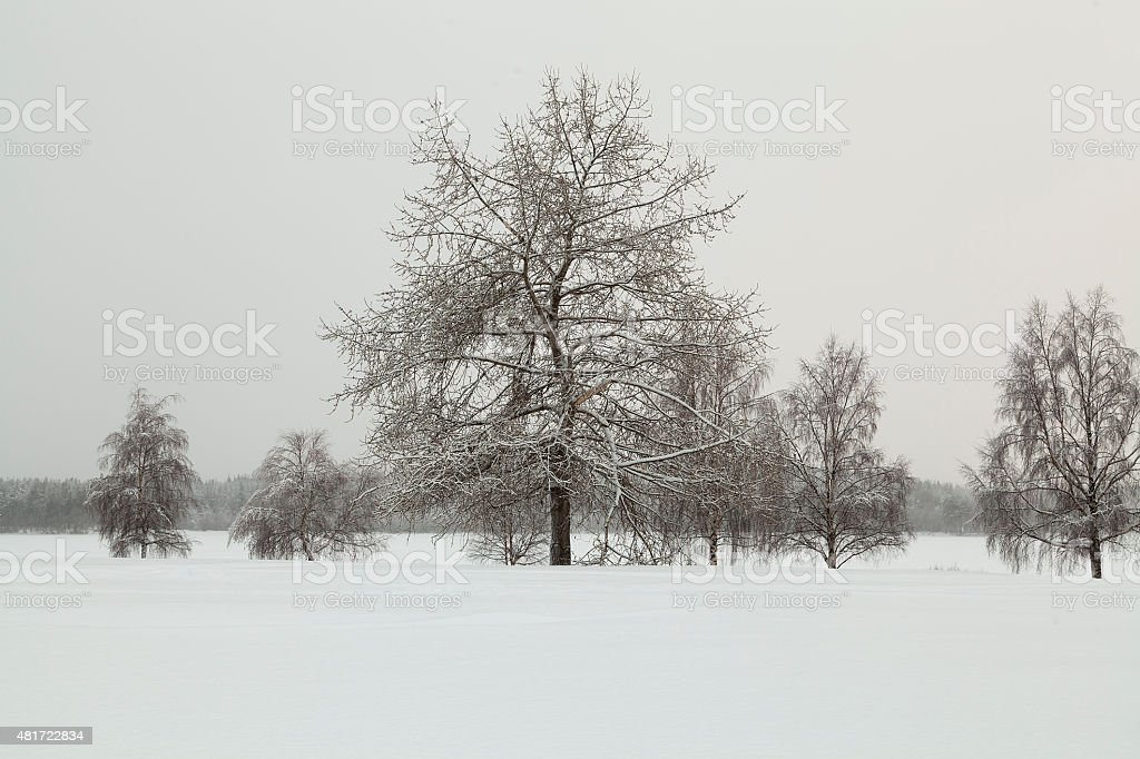 Trees in symmetry royalty-free stock photo