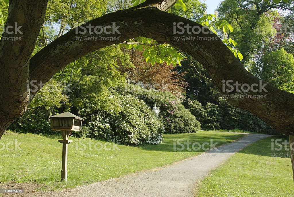 Trees in the Bergpark Wilhelmsh?he, Kassel royalty-free stock photo