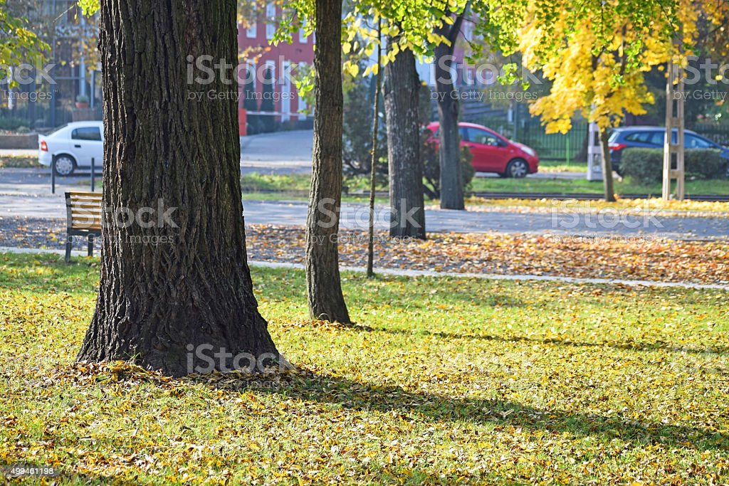 Trees in the city in autumn stock photo
