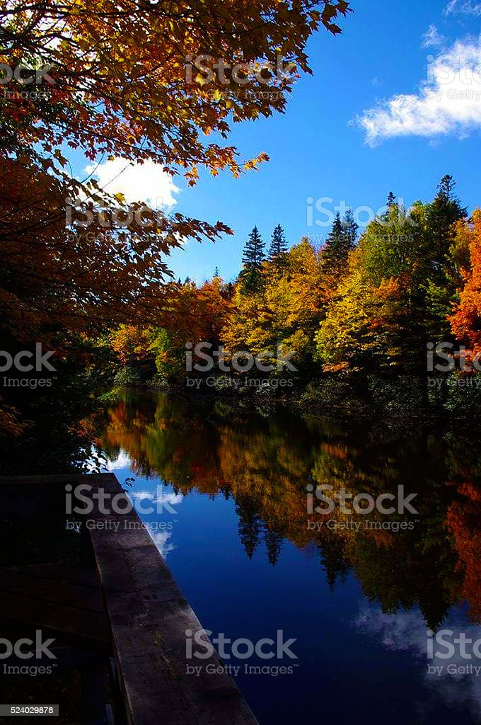 trees in the fall stock photo