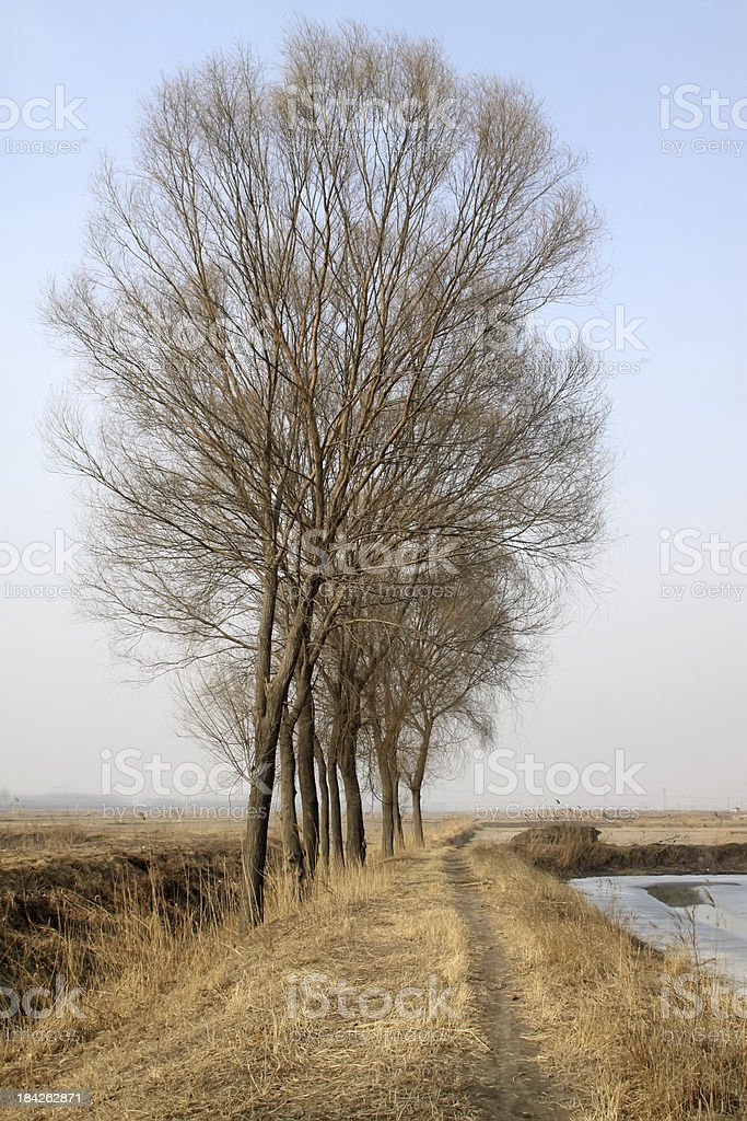 trees in the field royalty-free stock photo