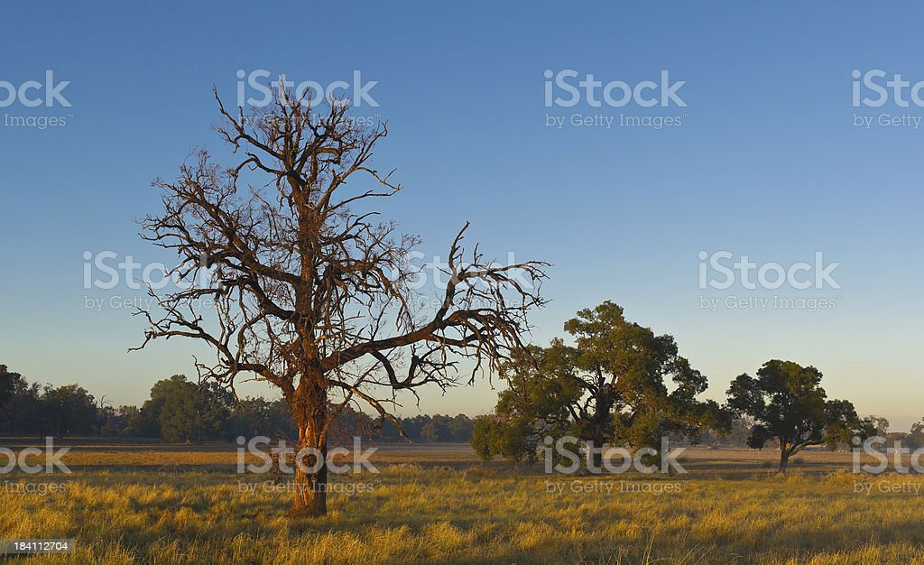 Trees in the Fields royalty-free stock photo