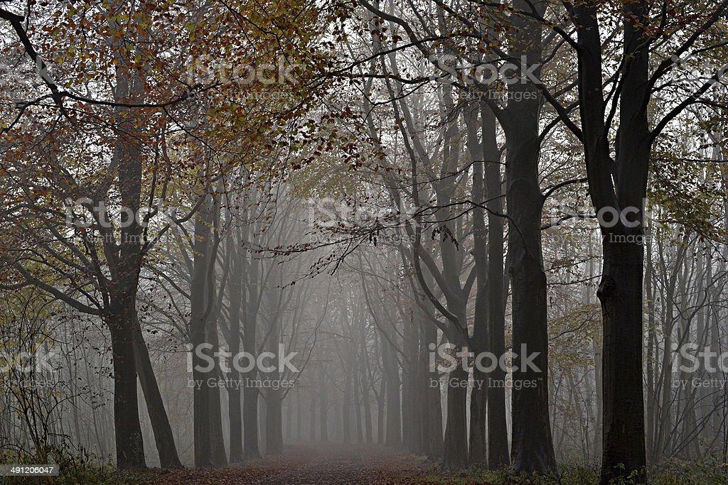 木の霧。 ロイヤリティフリーストックフォト