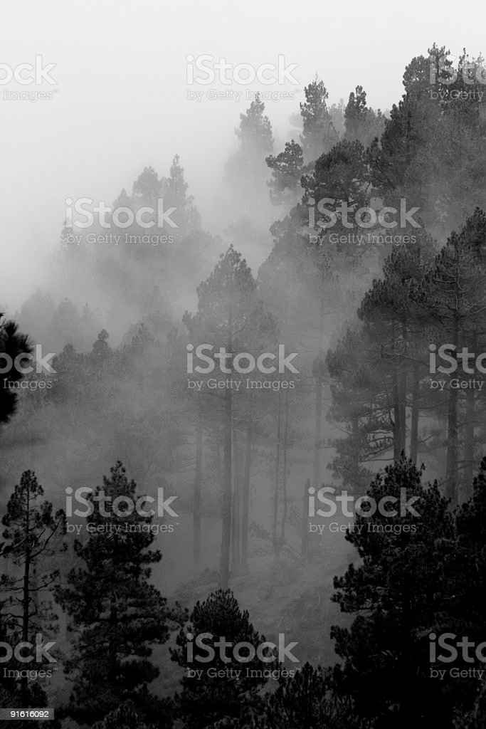 Trees in the fog royalty-free stock photo
