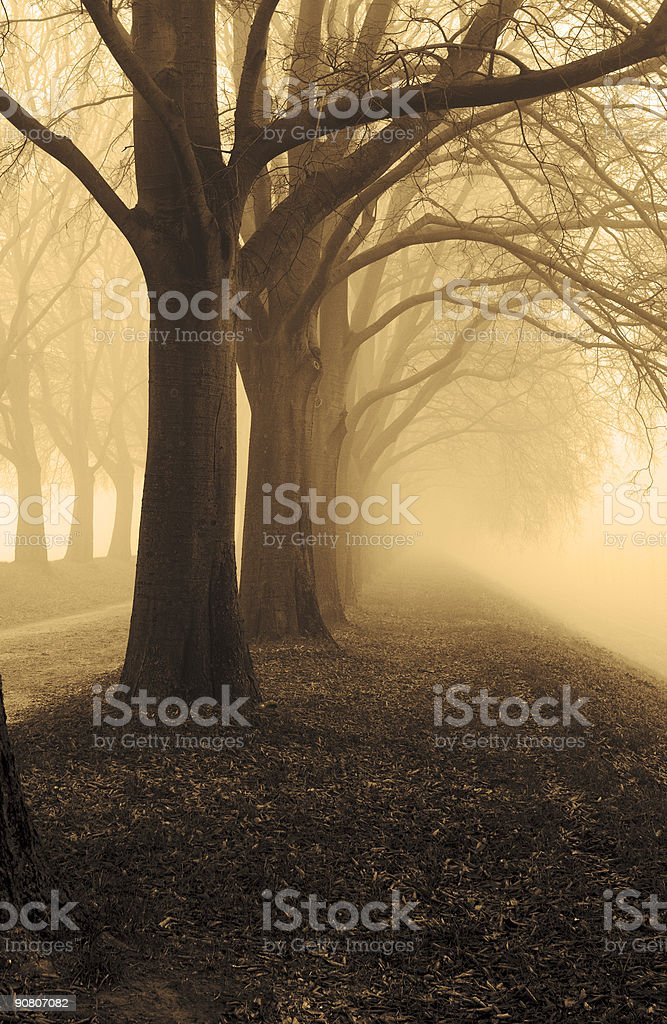 Trees in the fog - sepia royalty-free stock photo