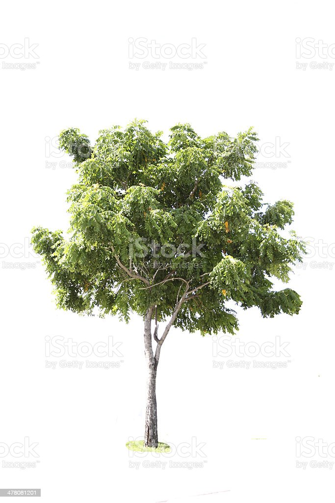 Trees in the forest. royalty-free stock photo