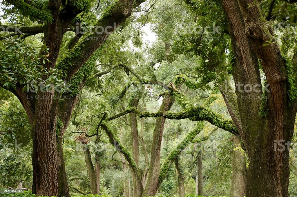 Trees in the Garden royalty-free stock photo
