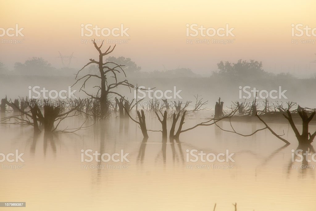 Trees in the Lake royalty-free stock photo