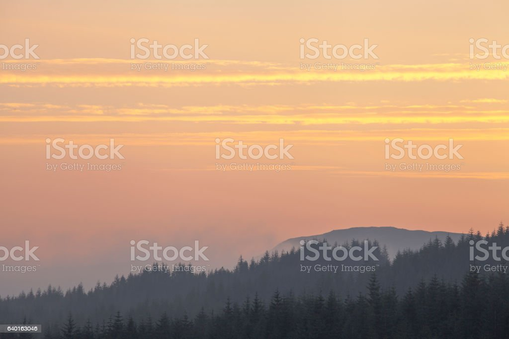 Trees in the mist at Sunrise in Scotland stock photo