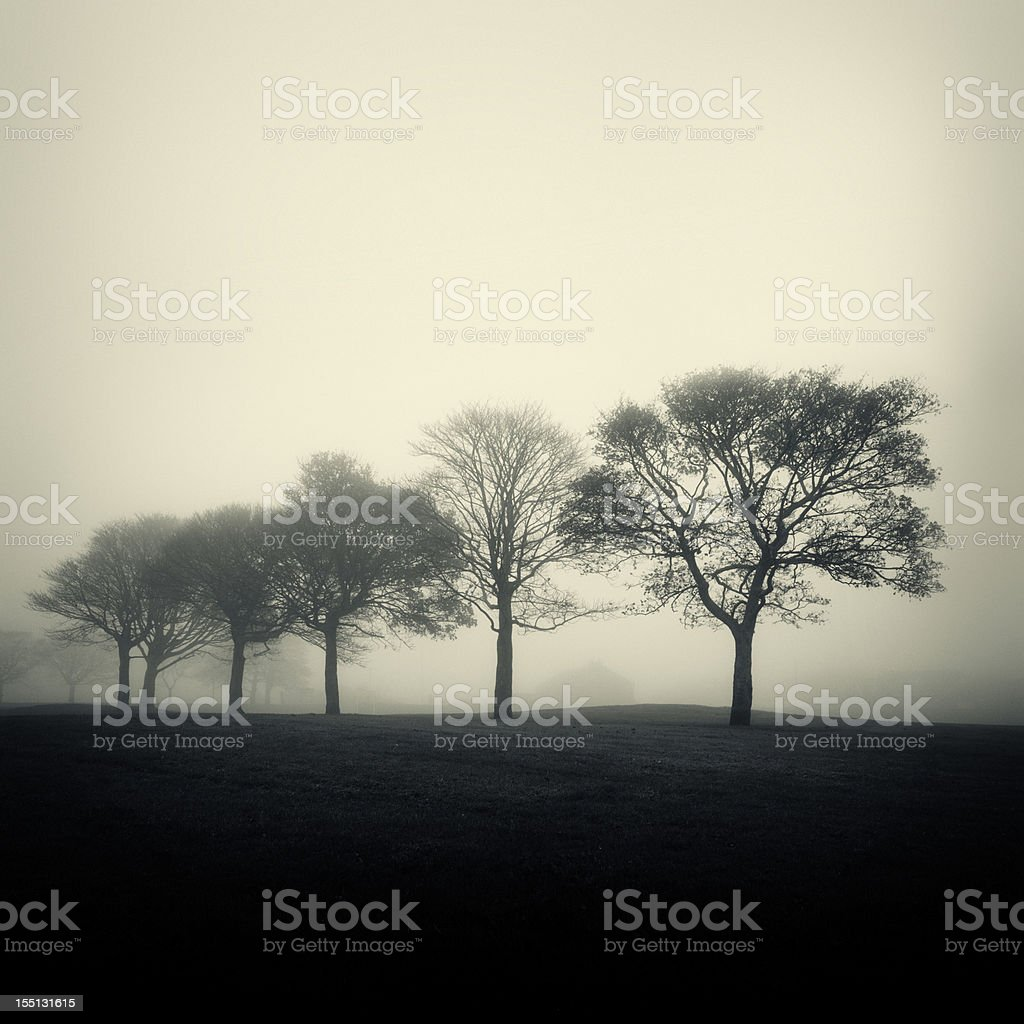 Trees in the Mist royalty-free stock photo